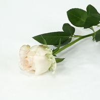 21. 연핑크장미 (1단10줄기)